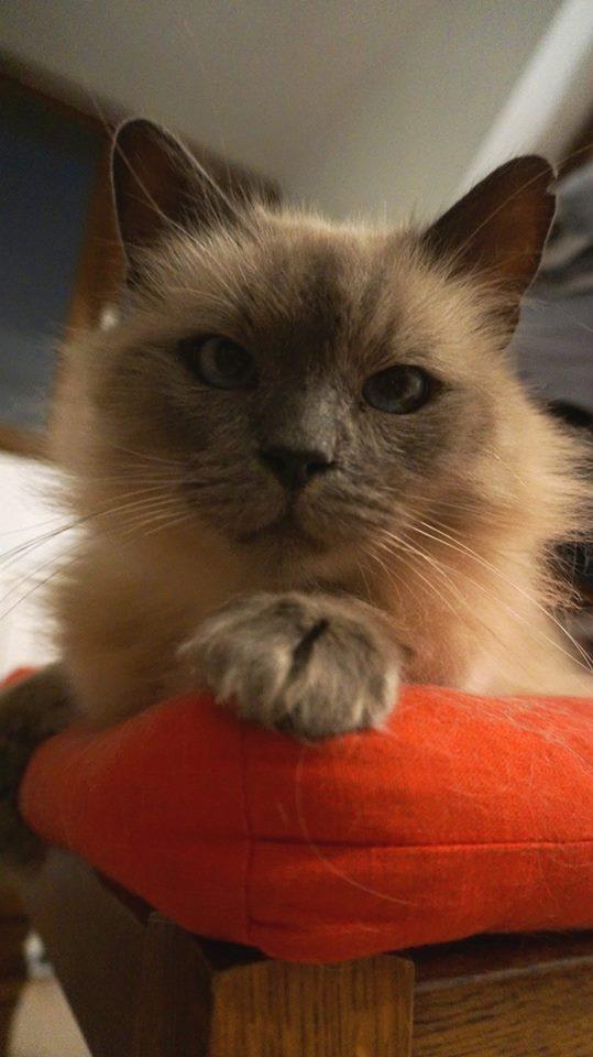 Samedi 29 octobre 2016 - Journée adoption - Magasin Vert - BETTON (35) 14463010