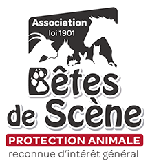 Syndrome de privation sensorielle ou chien peureux? Bds-lo10