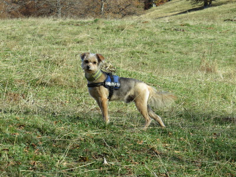Balades canines: Pays de Gex/Jura/Genève ou Albertville (73) - Page 5 Img_2720