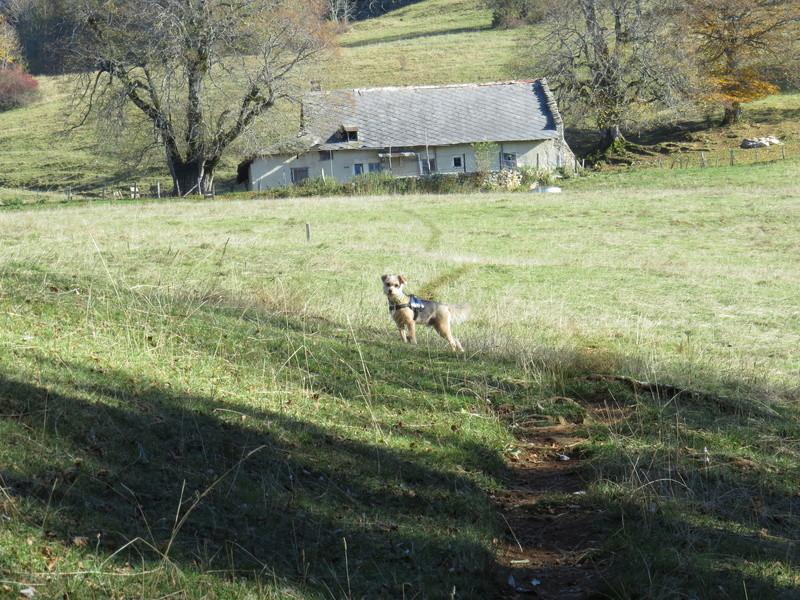 Balades canines: Pays de Gex/Jura/Genève ou Albertville (73) - Page 5 Img_2721