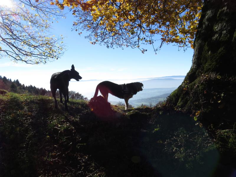 Balades canines: Pays de Gex/Jura/Genève ou Albertville (73) - Page 5 Img_2724