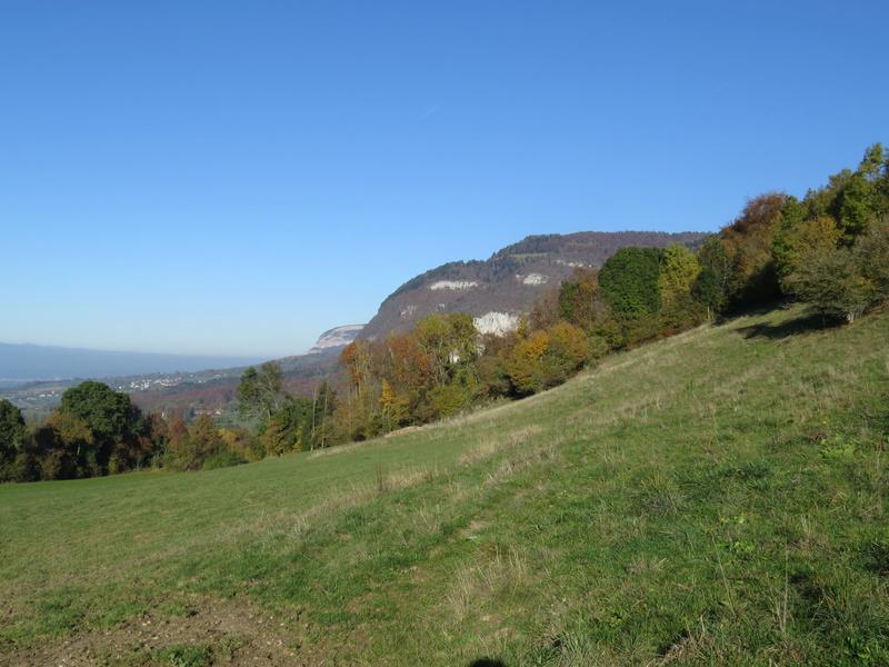 Balades canines: Pays de Gex/Jura/Genève ou Albertville (73) - Page 5 Img_2725