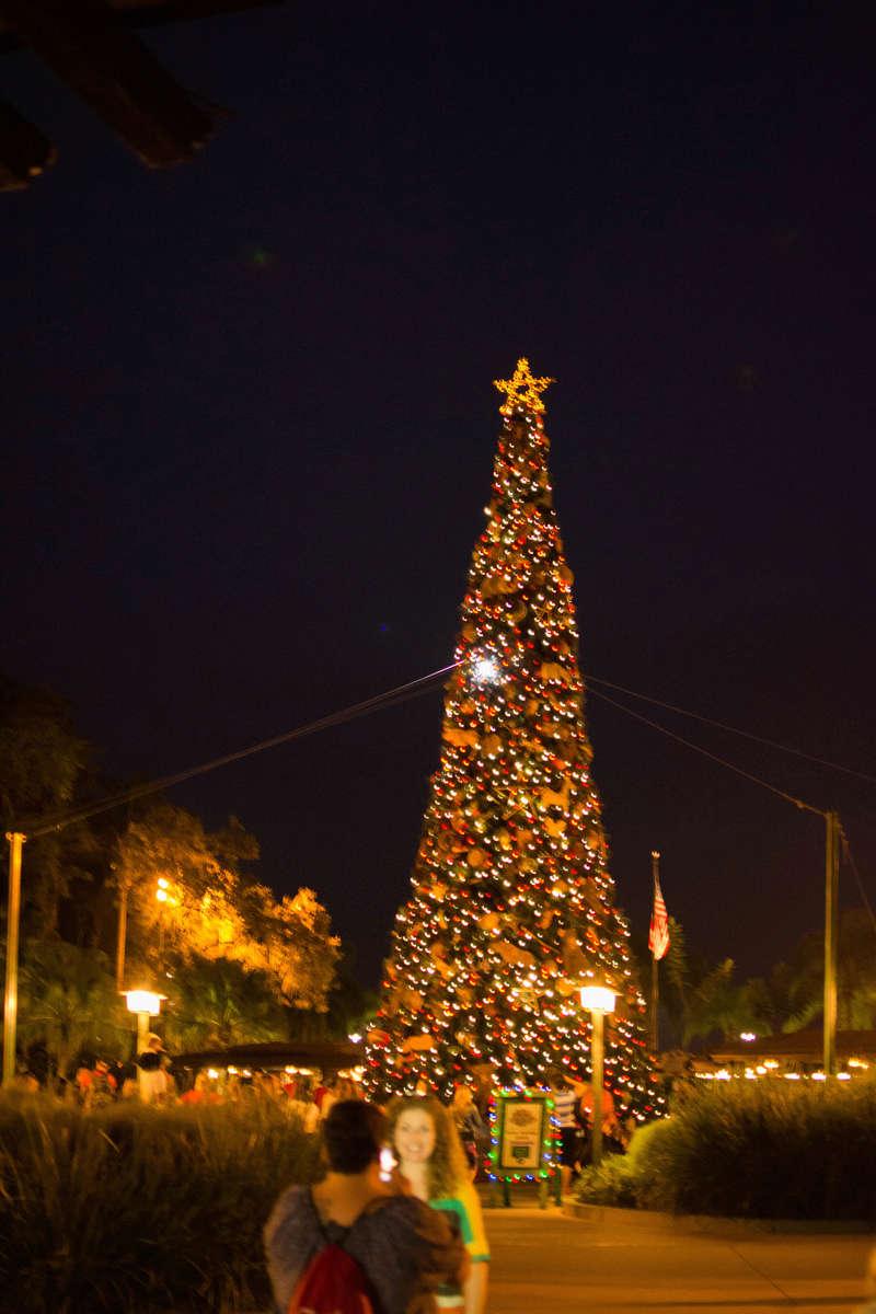 Once upon a christmas time: WDW, DCL, et Universal vu par 2 lyonnais du 01 au 20 novembre 2015 [TERMINÉ: 17/04/17] - Page 13 Dsc_8422