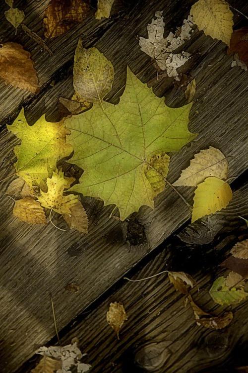bonzour bonne zournée et bonne nuit notre ti nid za nous - Page 3 Tumblr11