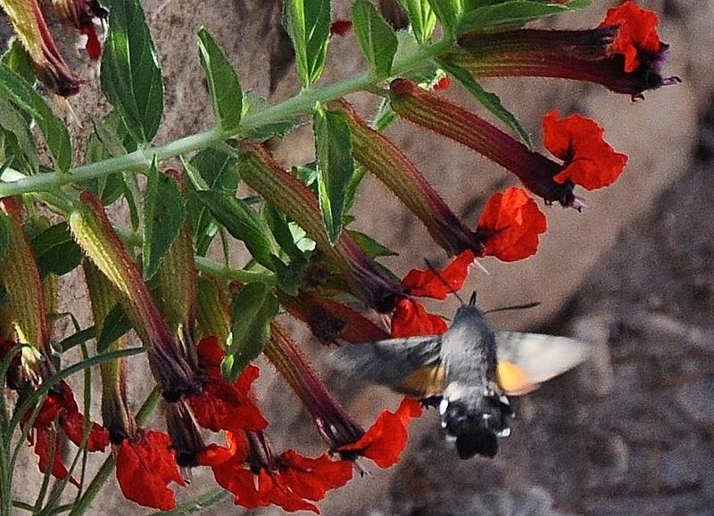 fil(et) à papillons - Page 10 00210