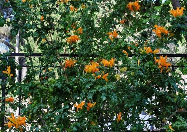 ondées d'octobre, le jardin renaît 004_6013
