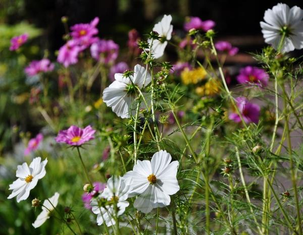 ondées d'octobre, le jardin renaît 004_6014