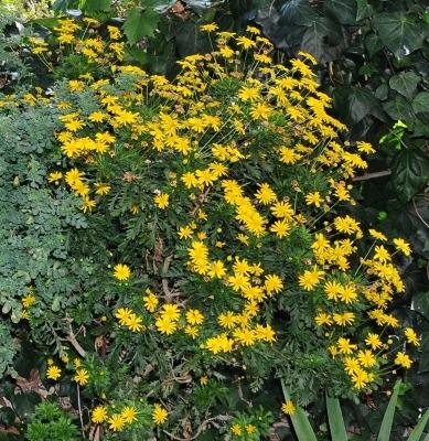 ondées d'octobre, le jardin renaît 005_5810