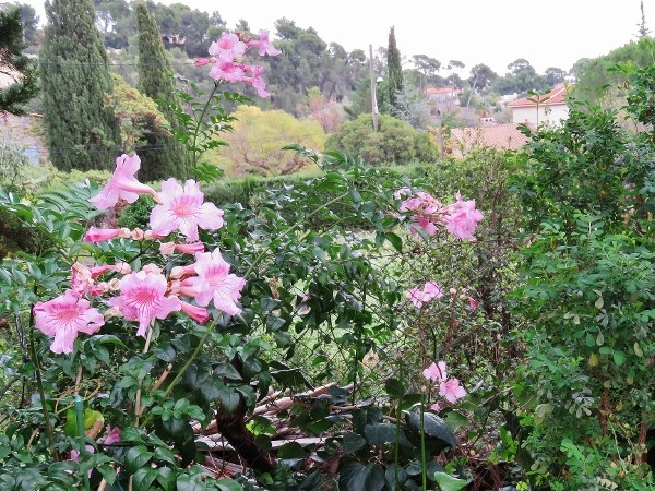 ondées d'octobre, le jardin renaît - Page 3 006_6013