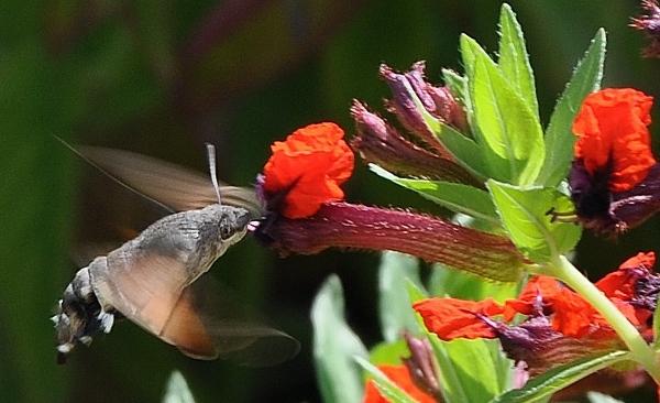 fil(et) à papillons - Page 10 007_6010