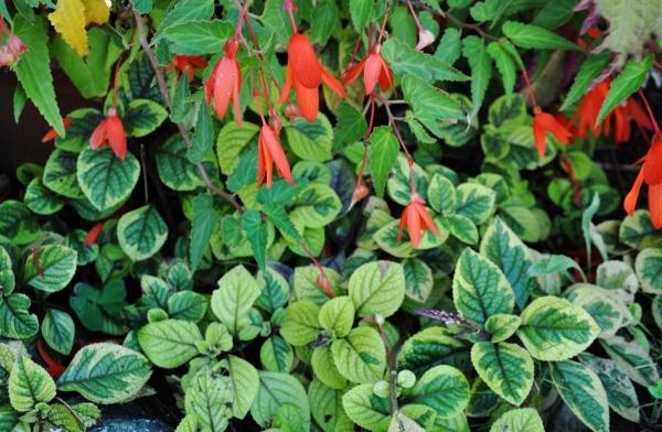 ondées d'octobre, le jardin renaît 049_6010