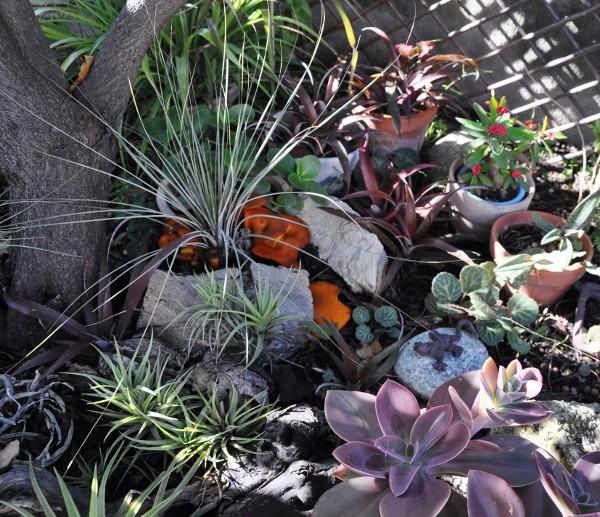 ondées d'octobre, le jardin renaît 053_6010