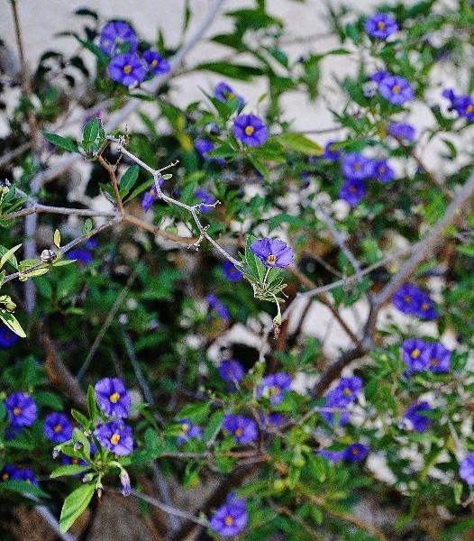 ondées d'octobre, le jardin renaît 057_5210