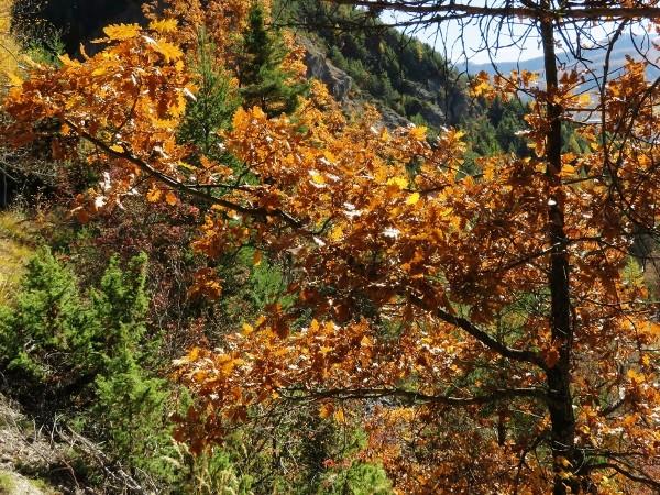 novembre dans les Hautes-Alpes (05) - Page 2 Automn22