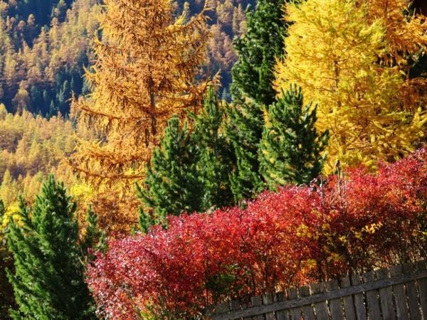 lumières d'automnes et paysages - automne 2016 Automn27
