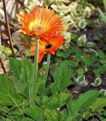 ondées d'octobre, le jardin renaît Florai14