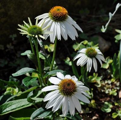 ondées d'octobre, le jardin renaît Florai15