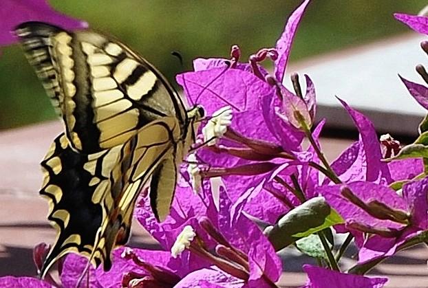 fil(et) à papillons - Page 10 Flore_12