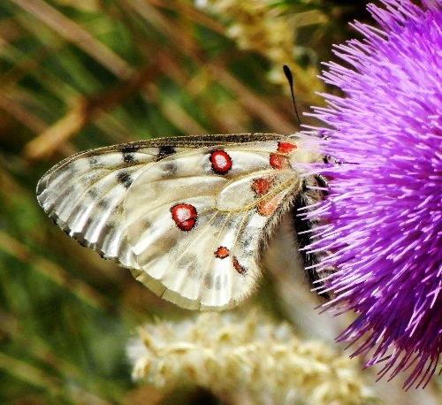 fil(et) à papillons - Page 10 Rimg5410