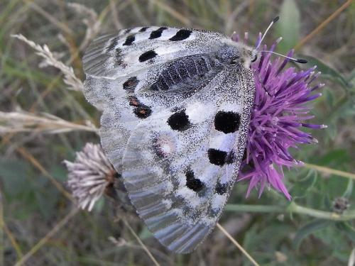 fil(et) à papillons - Page 10 Rimg6310