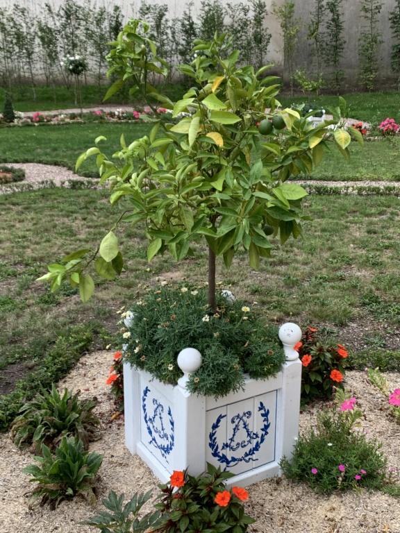 Restitution du jardin privé d'Elisabeth-Charlotte d'Orléans à Lunéville 703c5f10