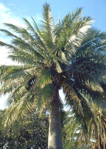 Pas à pas - La confection d'un palmier 1/72e 038a10
