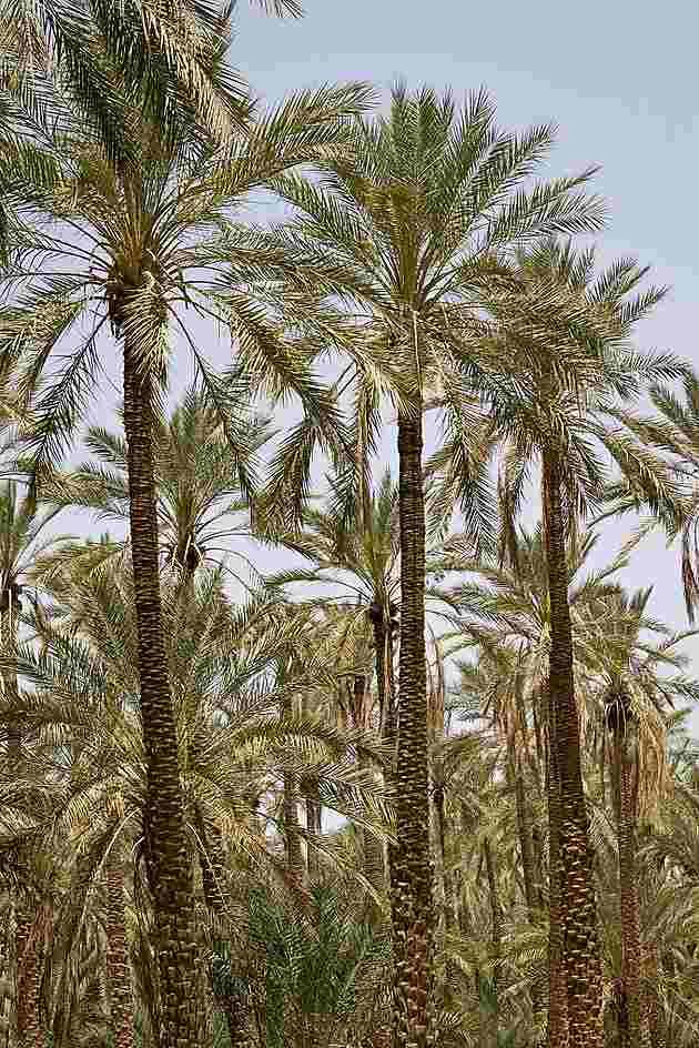 Pas à pas - La confection d'un palmier 1/72e 20130510