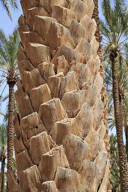 Pas à pas - La confection d'un palmier 1/72e 20130511