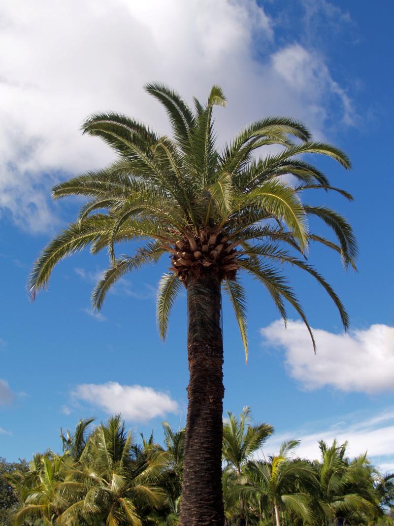 Pas à pas - La confection d'un palmier 1/72e Palmae10