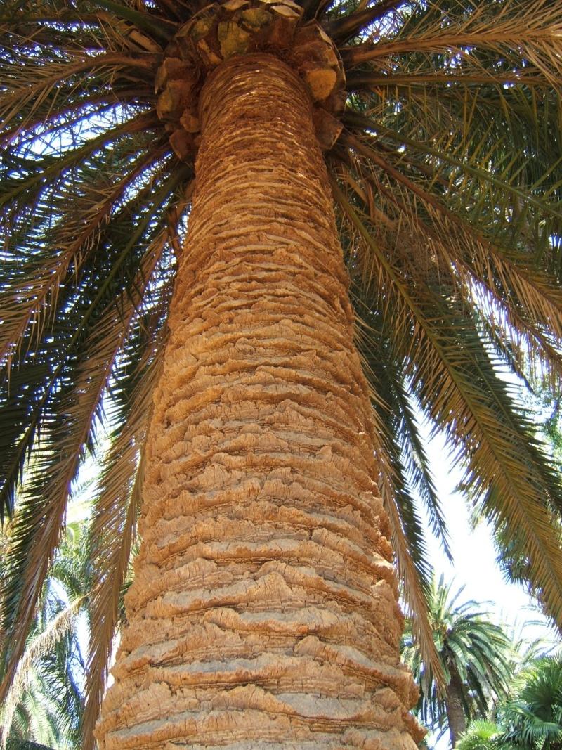 Pas à pas - La confection d'un palmier 1/72e Trunk-10