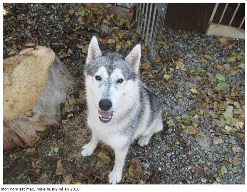 Max, Husky né en 2016, REFU Suisse Max_sp10