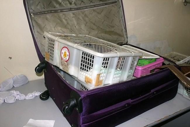 Les douaniers trouvent de tout dans les valises Valise11