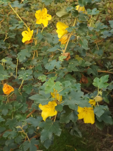 Floraisons du mois de septembre - Page 11 Dscf4522