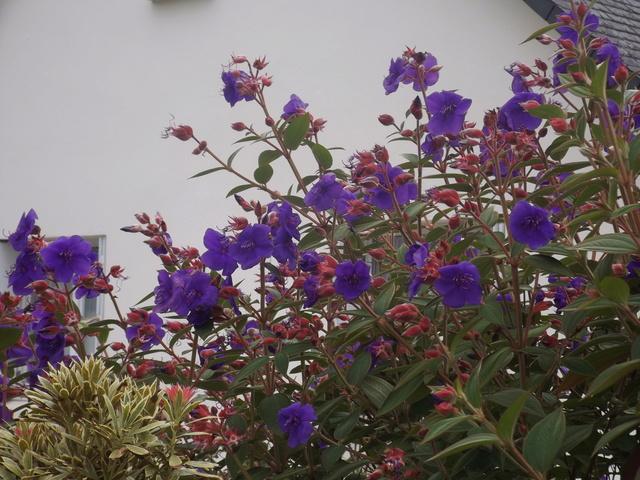 ondées d'octobre, le jardin renaît Dscf4620