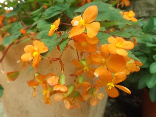 ondées d'octobre, le jardin renaît Dscf4623