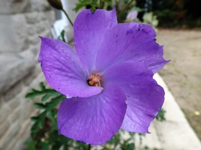 floraisons d'octobre - Page 15 Dscf4628