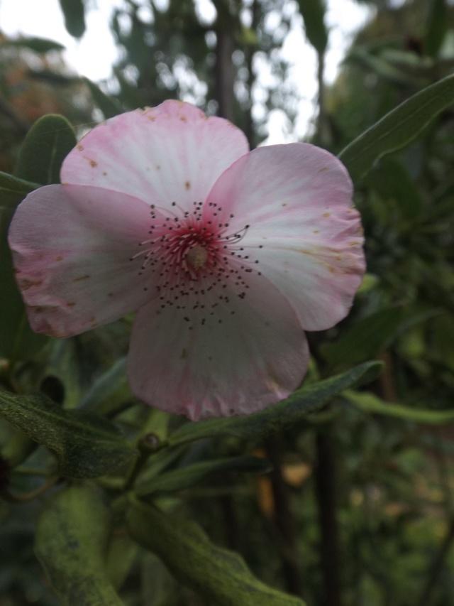 floraisons d'octobre - Page 15 Dscf4629