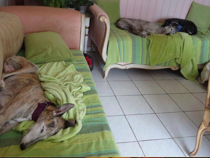 TADEO, barbudo bringé, 3 ans, en accueil chez Laurenciane  Adoptée  - Page 23 Tadeo222