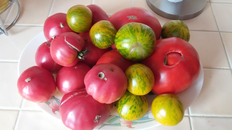 Tomates - Page 3 20160933