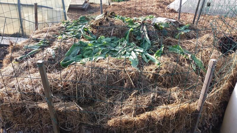 Et si on parlait compost?? - Page 6 20161041