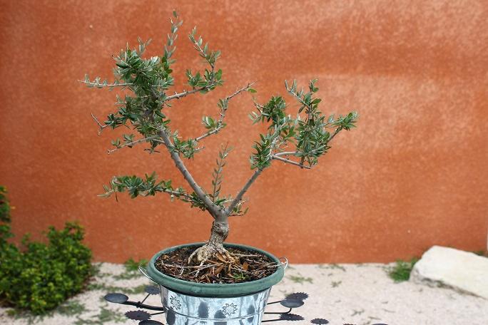 Printemps bonsaï - Page 2 Img_8813