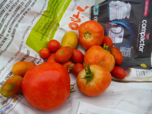 Tomates - Page 4 P1090613