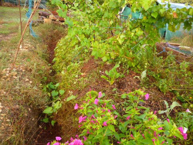 je jardine avec l'esprit de la permaculture  - Page 4 P1100029