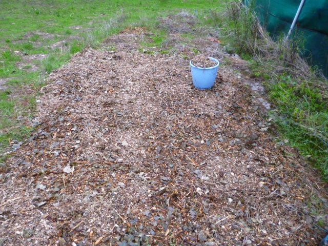 je jardine avec l'esprit de la permaculture  - Page 4 P1100121
