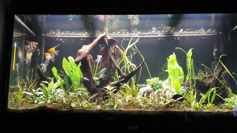 Aquarium juwel rio 300 - Page 2 20160910