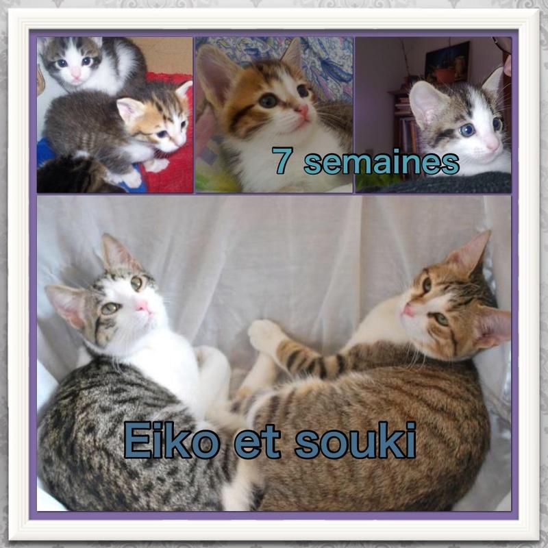 Spécials Photos : Avant/Après de nos chats - Page 15 110