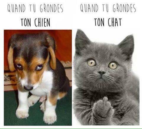 Images du jour sur les chats - Page 22 14322110