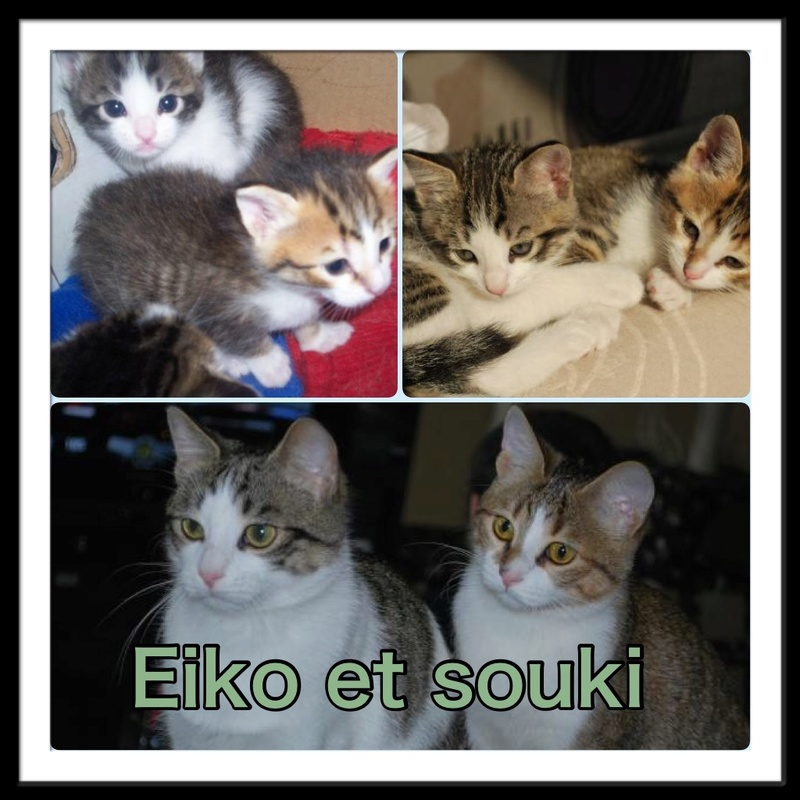 Spécials Photos : Avant/Après de nos chats - Page 16 210