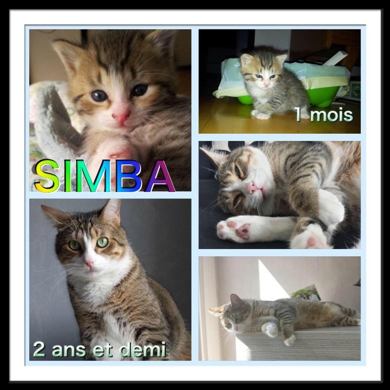Spécials Photos : Avant/Après de nos chats - Page 15 310