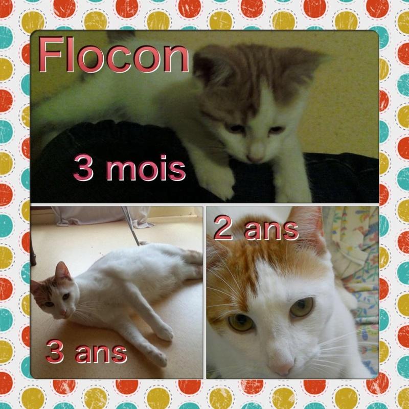 Spécials Photos : Avant/Après de nos chats - Page 16 Flocon10